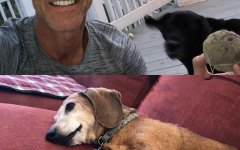 """President David Bushman said his dogs Penny (top) and Ally (bottom), are """"not very helpful when it comes to my Biology 110 class, meetings with the vice presidents or trustees,"""" so they tend to do dog things like sleeping on the couch when he's working. """"But their superpower is stress reduction after work,"""" said Bushman."""