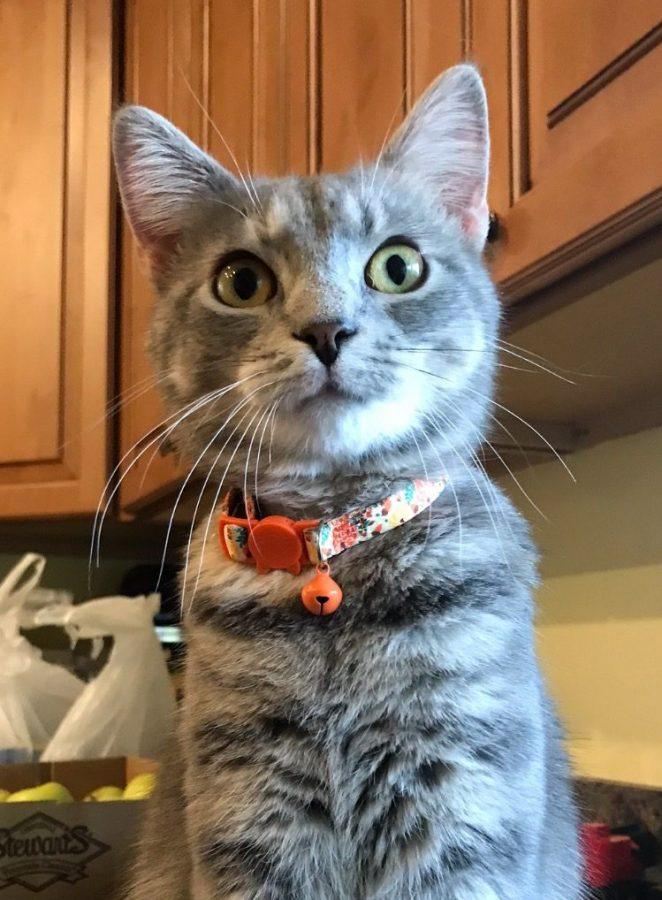 Kendras Cat