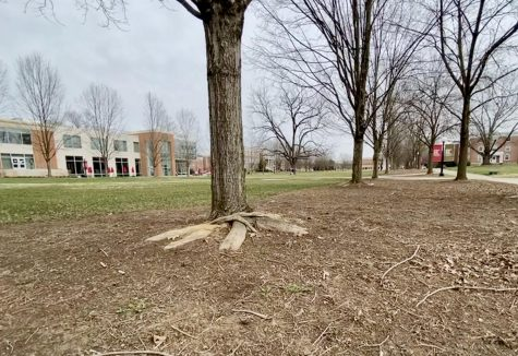 Campus Mall (FLC in the background)
